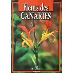 Foggi, Fleurs des Canaries.