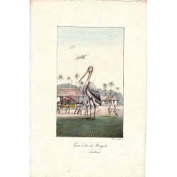 Lithographie, grue sac du bengale,1826, Comte de Noe, joliement coloriée