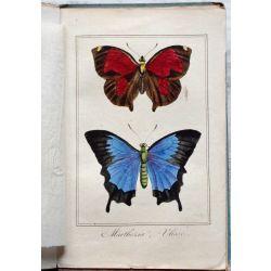 la19 Papillons, metamophoses,  titre et 10 gravures en couleur de Pancrace Bessa